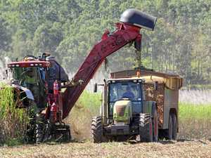 Sugar prices tumble but farmers looking to sweeter times