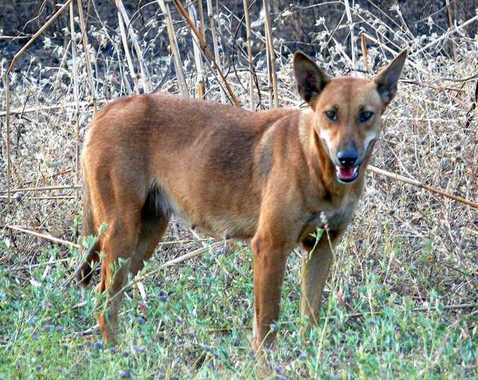 STATE BUDGET: More than a million dollars has been allocated in the budget to roll out programs helping fight wild dogs.