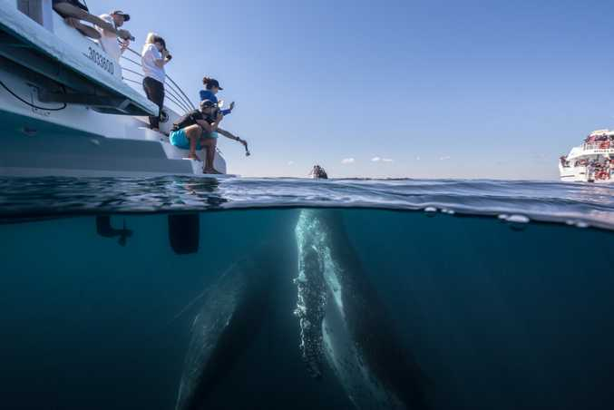 Get up close and personal with these gentle giants at Hervey Bay.