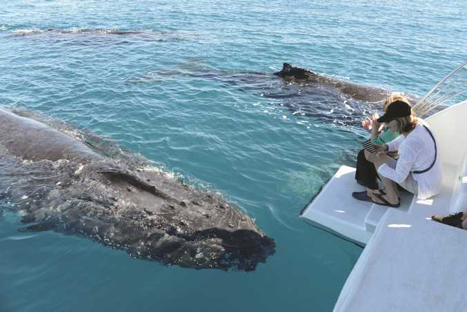 There is nowhere else on earth like Hervey Bay, says marine scientist.