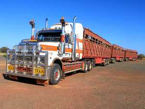 THE LONG ROAD: Hauling camels through Central Australia.