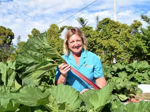 A new leaf: Bundy farmers' rhubarb experiment