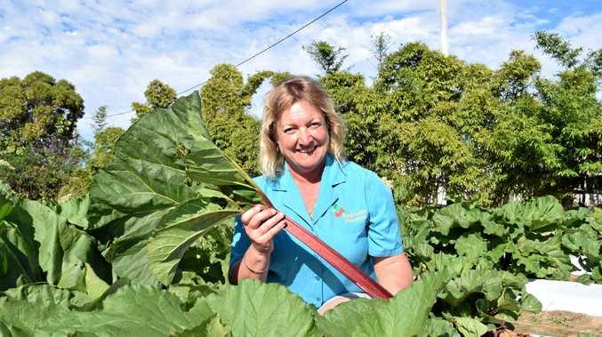 RHUBARB RHUBARB: Debbie Meiers with her trial crop of rhubarb outside Bundaberg.