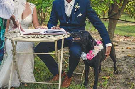 A DOG'S LIFE: Amy and Tristian Wright adopted Echo and decided to make her part of their recent wedding ceremony.