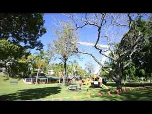 Memorial Park Trees get trimmed