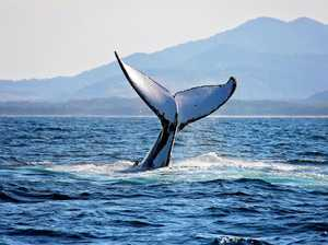 The whales are coming! Find out all you need to know these school holidays