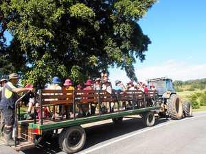 Kids plant 1300 trees at Byron Parklands