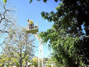 Diseased and dying park trees get trim