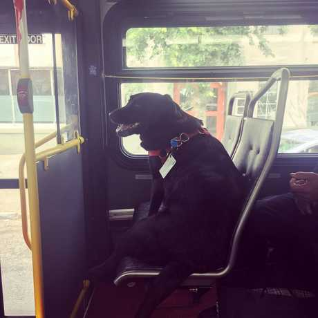 A photo of Eclipse riding the bus in Seattle