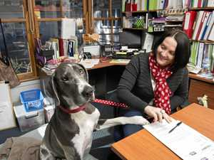 RUFF DAY: YellowBridge disability support team general manager Jodie Collins with her great dane Bonnie on Bring Your Dog to Work Day yesterday.