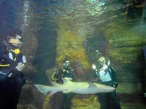 Shark swim gives pets another shot at life