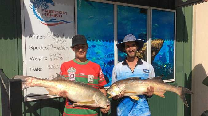 Scott and Glyn with some very respectable threadfin - weighed in at 6.55kg and 7.86kg. Caught in the river.