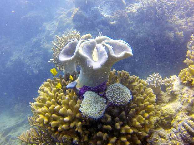Mackay Dive Club - Scawfell Island