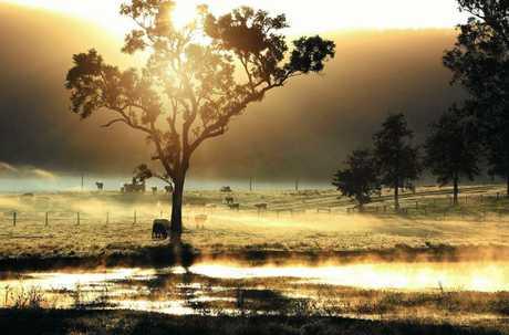 Nicola Brander's stunning hinterland photograph.