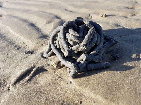 The bizarre object found on a Sunshine Coast beach.