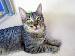 Kitten seeks purr-fect new home
