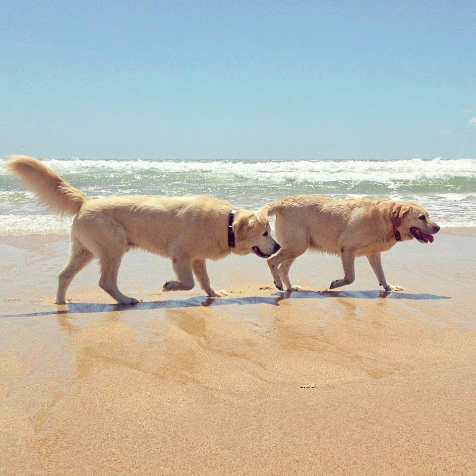 Beach buddies at Currimundi dog beach.