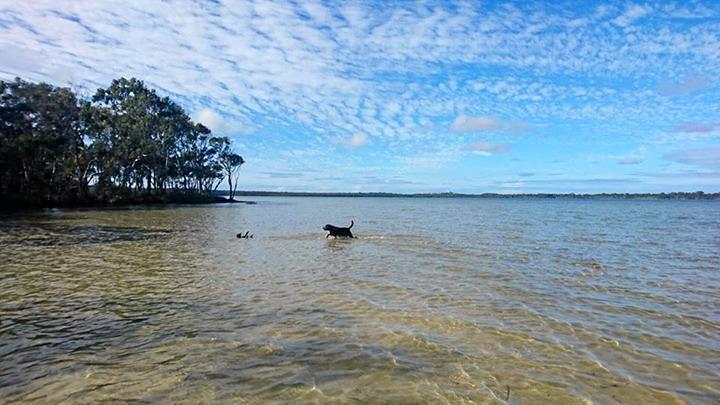 Take your dog for a dip and a walk at Lake Webya.