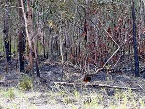 Overnight bushland fire in Glen Eden