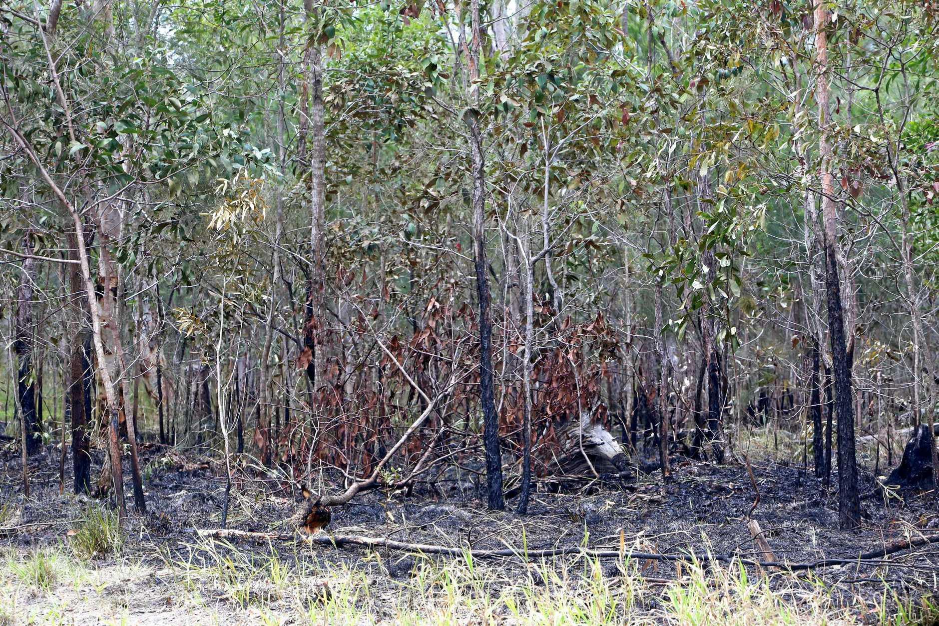 Burnt out bushland.