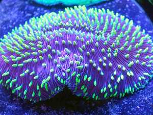 JOBS BOOST: The money will allow Ultra Coral Australia to grow their global business.