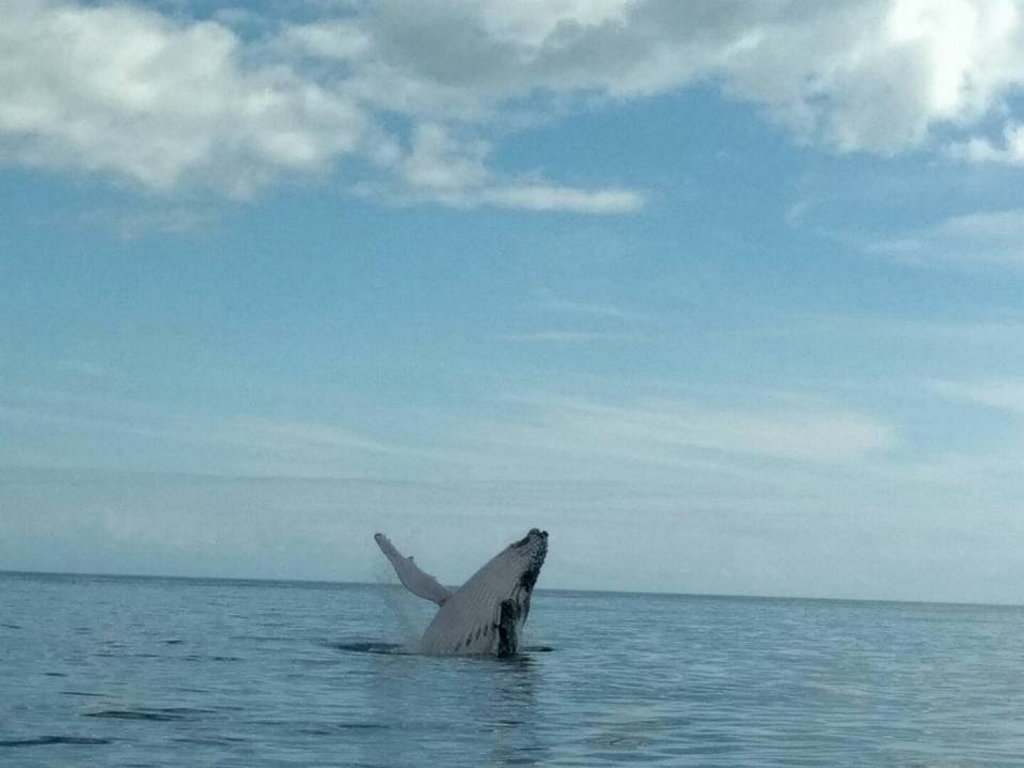 One of the first humpbacks of the season has been spotted making a splash near Moon Point on Fraser Island.