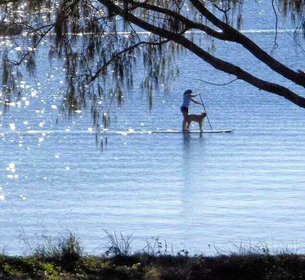 FRIENDLY VISIT: Noelani Chalmers was joined by a pod of dolpins while stand-up paddleboarding off Woodgate Beach.