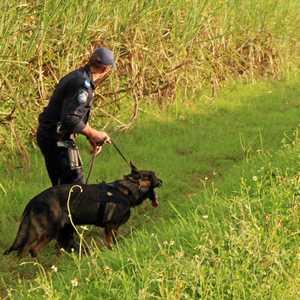 Dog Training Currumbin