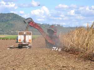 Canegrowers boss reveals issues with crush start