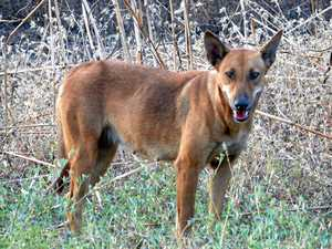 Resident's run-in with wild dogs sparks investigations