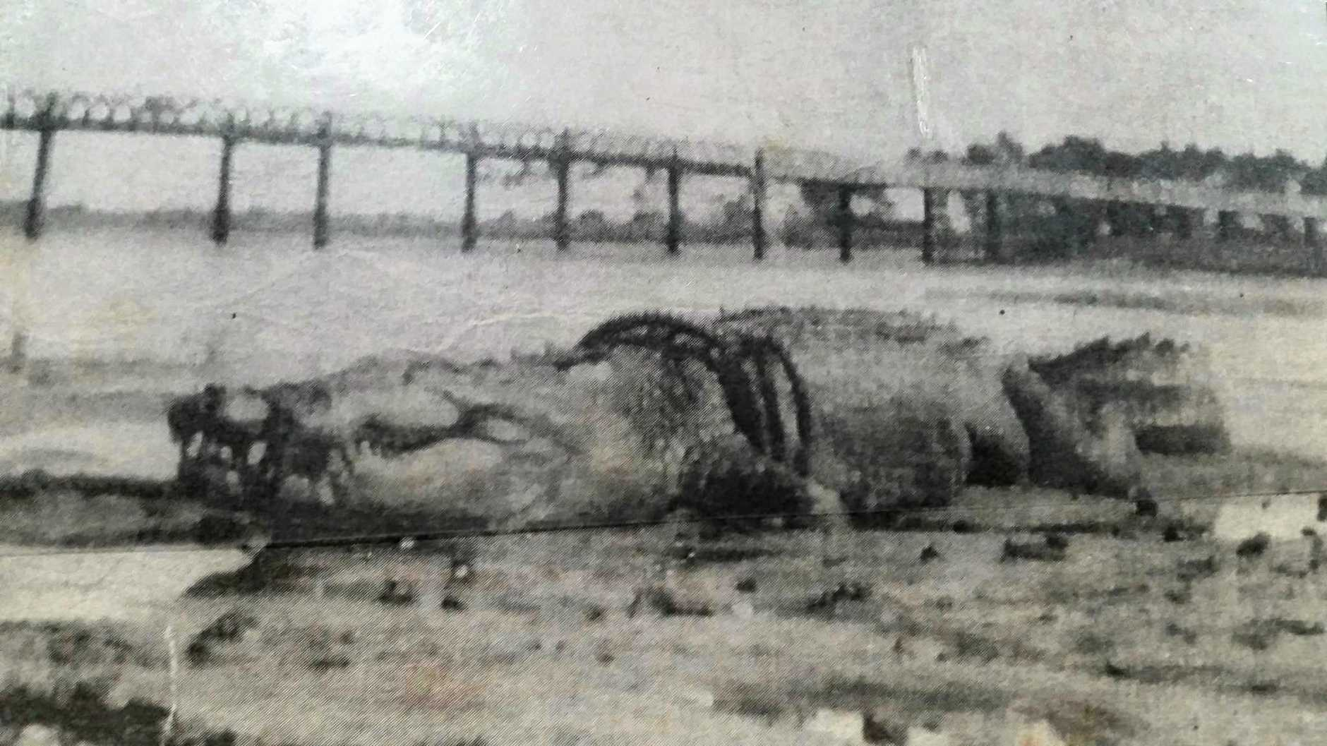 Does this historic photograph show the monster  9.7m (32 foot) crocodile reportedly shot from the Leichardt Hotel in Mackay on an unknown date? The jury's still out.