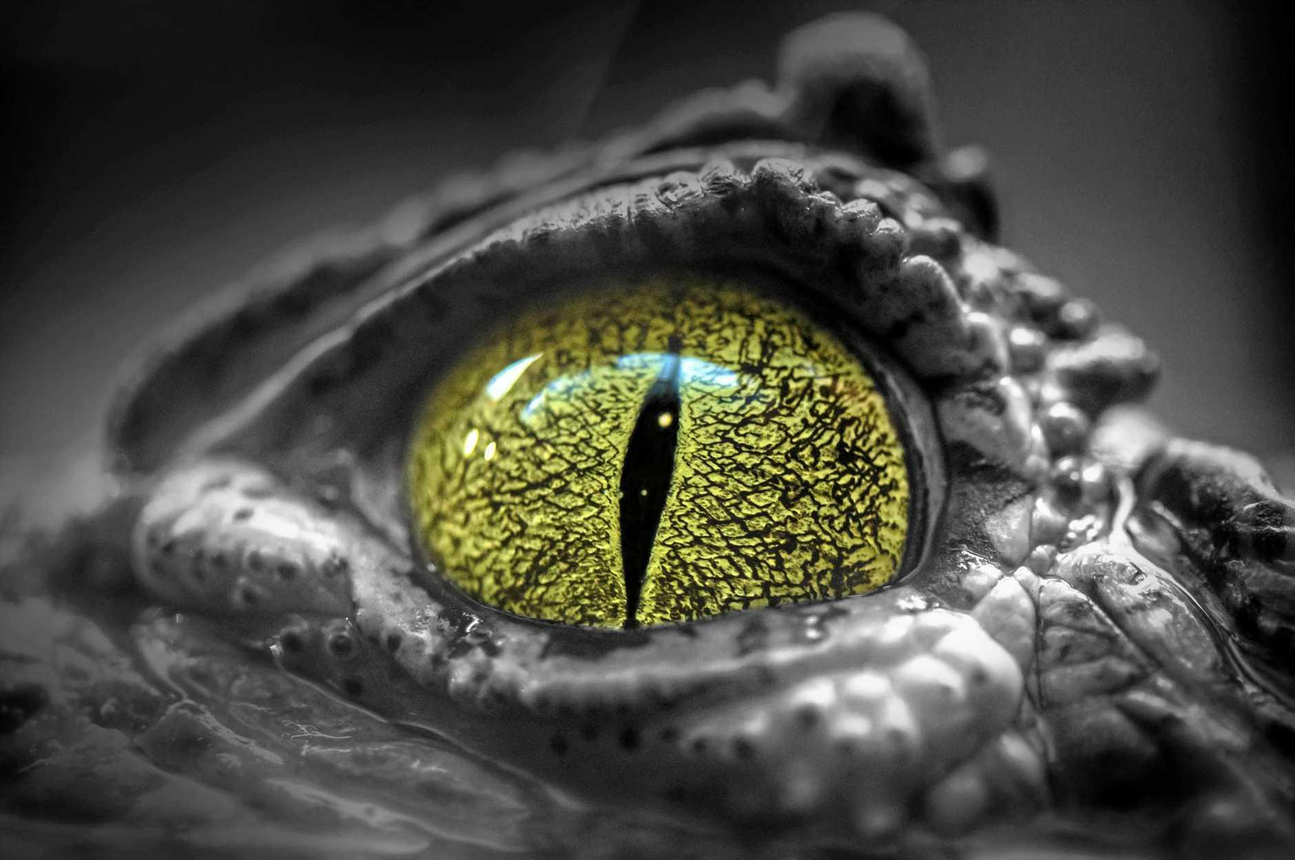 Eye af a crocodile