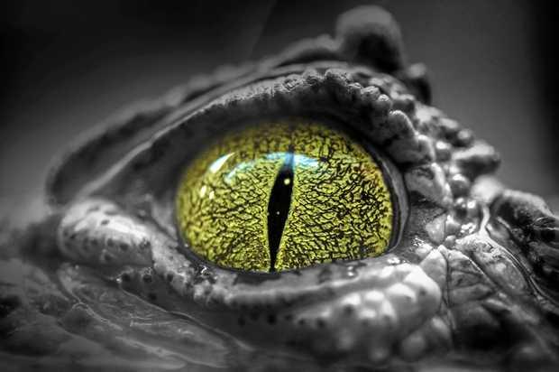 Should crocodiles be shot?