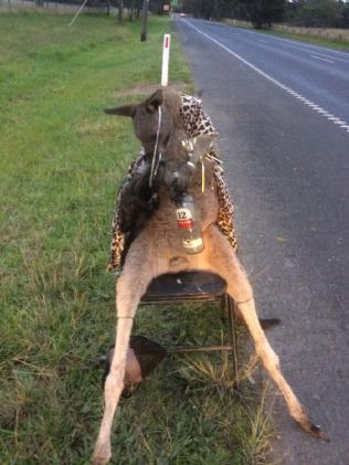 A dead kangaroo has been found dressed up and tied to a chair on the side of a road in Melbourne's outer northeast.