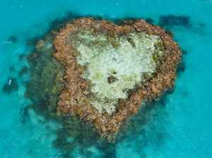 Save the heart of the reef