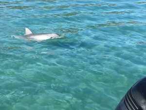 Dolphins at GKI