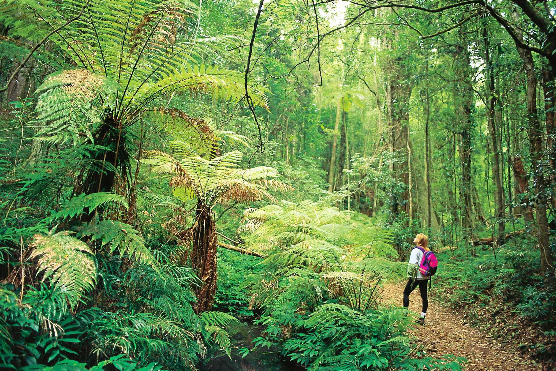 The Bunya Mountains is a worthy detour from your Brisbane Valley adventure.