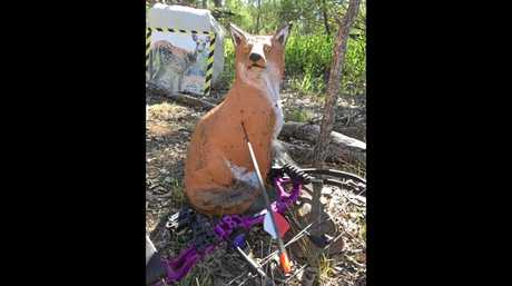 3D fox, stolen from the Chinchilla Archers.