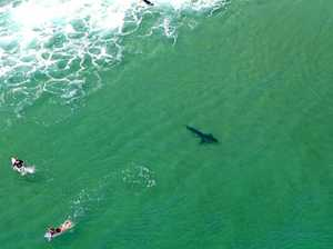 New shark detection technology ready for summer