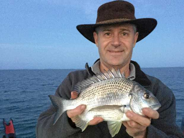 There are plenty of good bream like this along the front of Redcliffe at the moment.