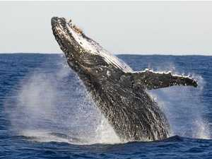 Whales steal the spotlight at Dreamer Festival