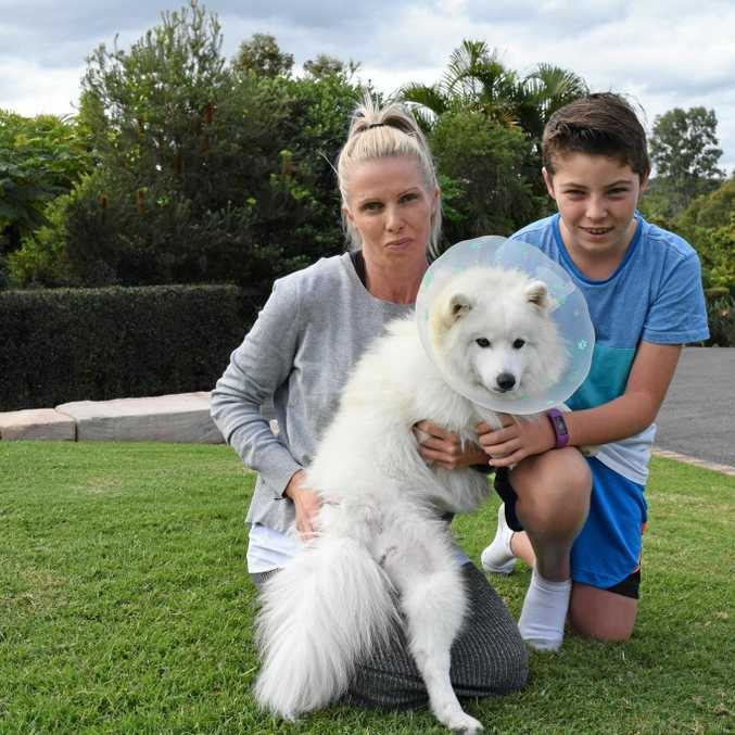TRAUMATISED: Tracy Gaff and her son Ryan are too scared to walk their dog Max after a larger dog set upon and hunted them.