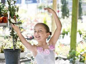 New camellia dances way to Toowoomba