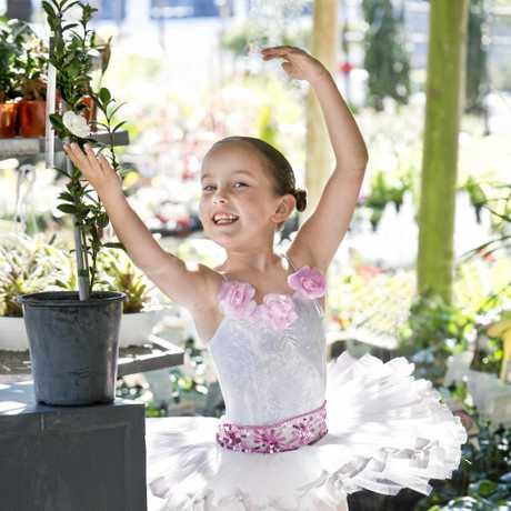 BALLET BLOOM:  Ballerina Phoebe Mathey, 7,  with new camellia Ballerina . Wednesdayday, 5th Jul, 2017.