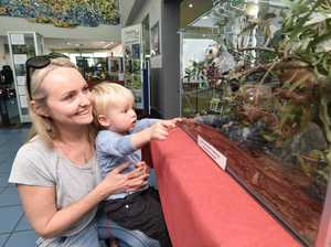 Display highlights perils of local wildlife