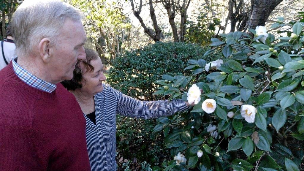 John and Rosemary Keenan admire one of the 100 or so magnificent camellia plants to be on display at this year's Winter Garden.