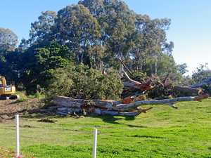 Trees removed to make way for Telegraph Road upgrade