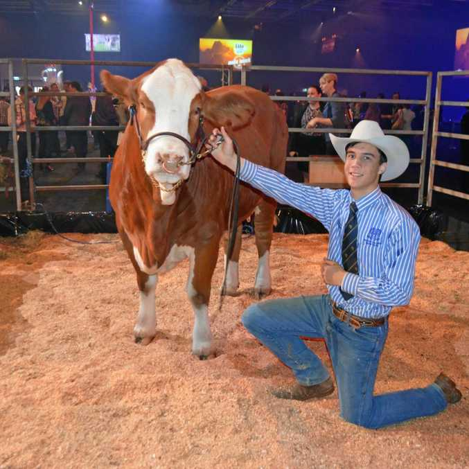 Leyton Rodrigues from Nudgee College handled Simbrah cow Gowrie Lucinda at the Ekka launch.