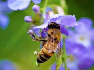 Leading beekeeper fined over threatening disease