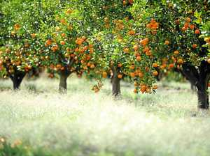 Gardening: Grow your own citrus trees